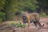 Ochrana ohrožených druhů