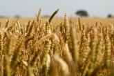 Půdní kontroverze aneb společná zemědělská politika EU